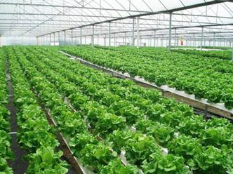 亚搏体育手机版市旗鹏现代农业工程有限公司